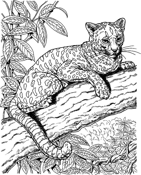 Jaguar, : Amazing Animal Jaguar Coloring Pages