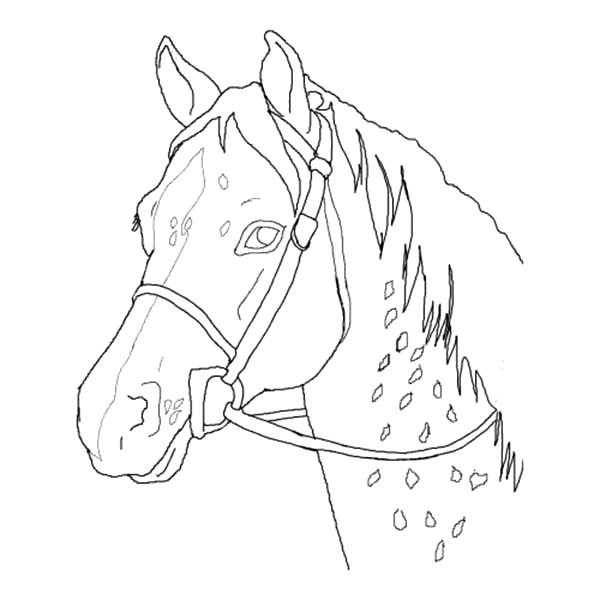 Appalooshorse, : Appalooshorse Head Outline Coloring Pages