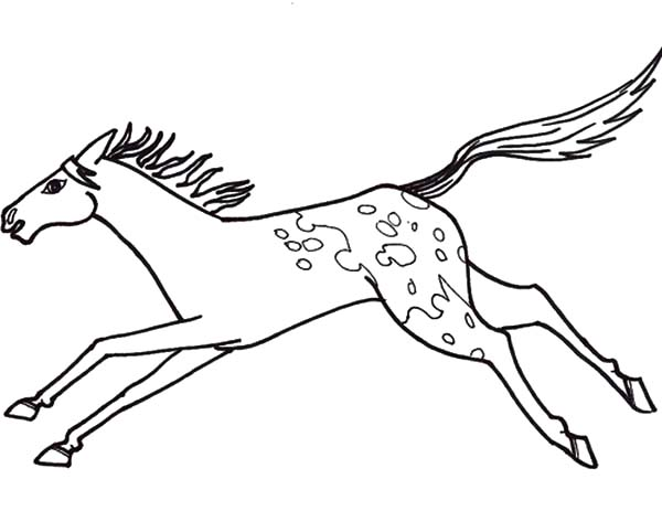 Appalooshorse, : Appalooshorse Jumping Coloring Pages