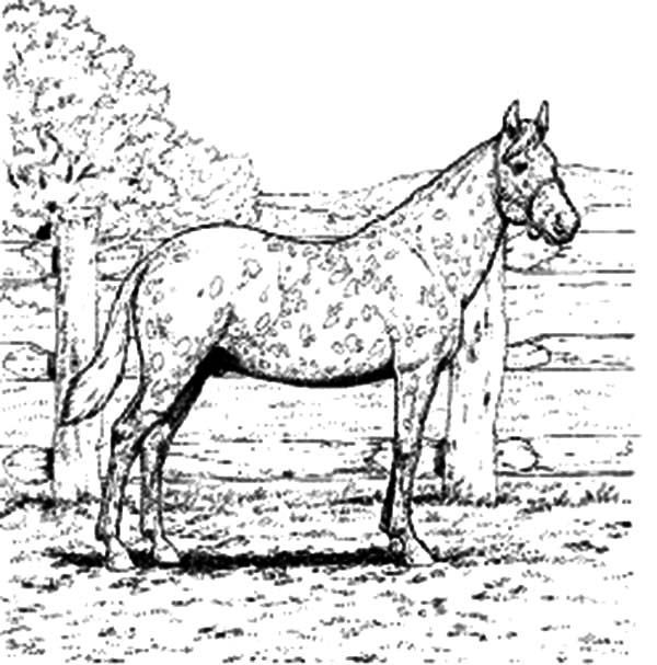 Appalooshorse, : Appalooshorse Leopard Complex Coloring Pages