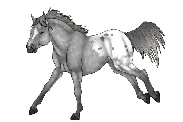 Appalooshorse, : Appalooshorse Strong Feet Coloring Pages