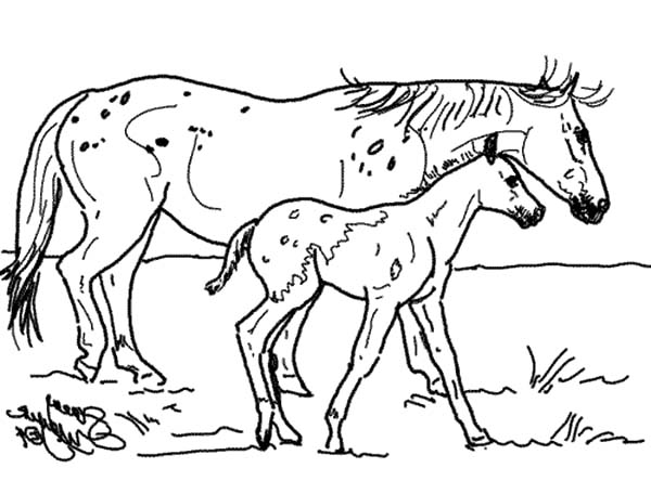 Appalooshorse, : Appalooshorse and Her Baby Coloring Pages