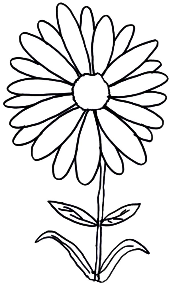 Aster Flower, : Aster Flower Coloring Pages for Kids