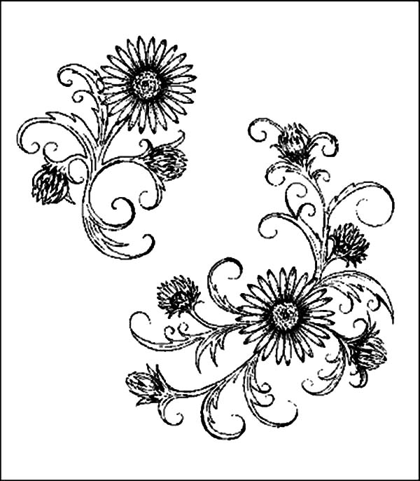 Aster Flower, : Aster Flower Deviant Art Coloring Pages