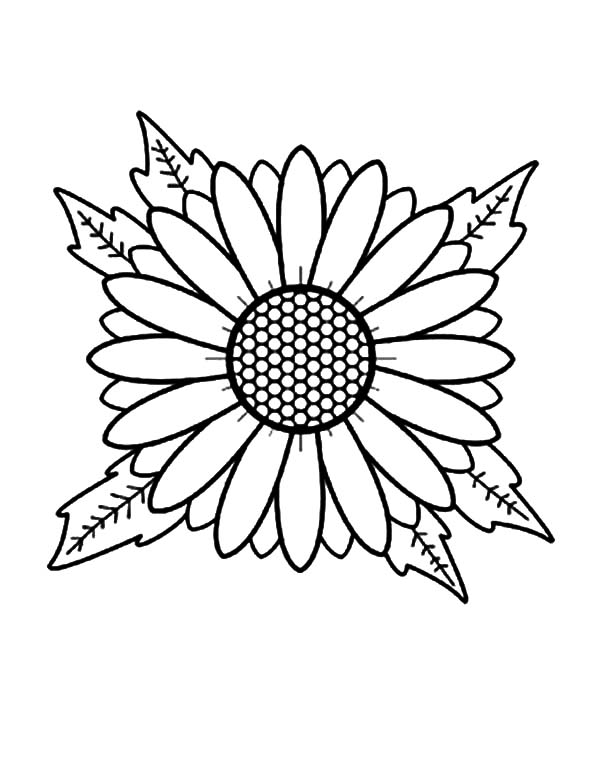 Aster Flower, : Aster Flower Head Coloring Pages