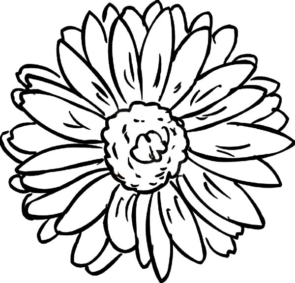 Aster Flower, : Aster Flower Potrait Coloring Pages