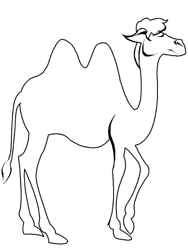 Bactria Camel, : Bactria Camel Walking Elegantly Coloring Pages