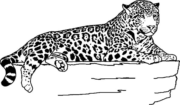 Jaguar, : Female Jaguar Coloring Pages