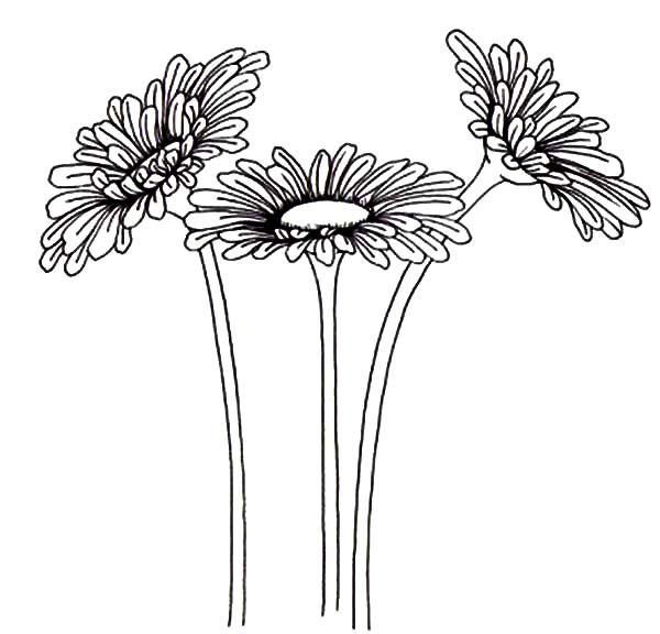 Aster Flower, : Gardening Aster Flower Coloring Pages