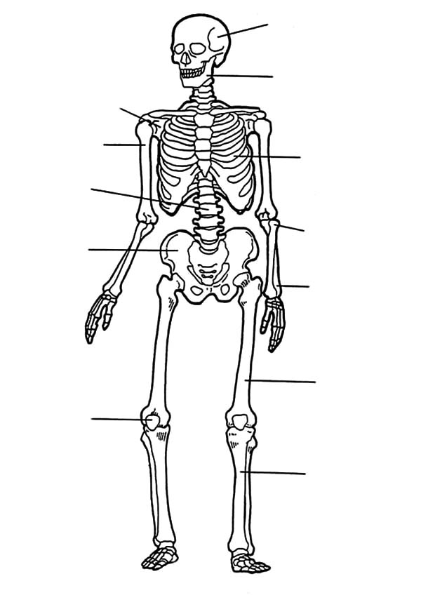 Anatomi, : How to Draw Anatomi of Bones Coloring Pages