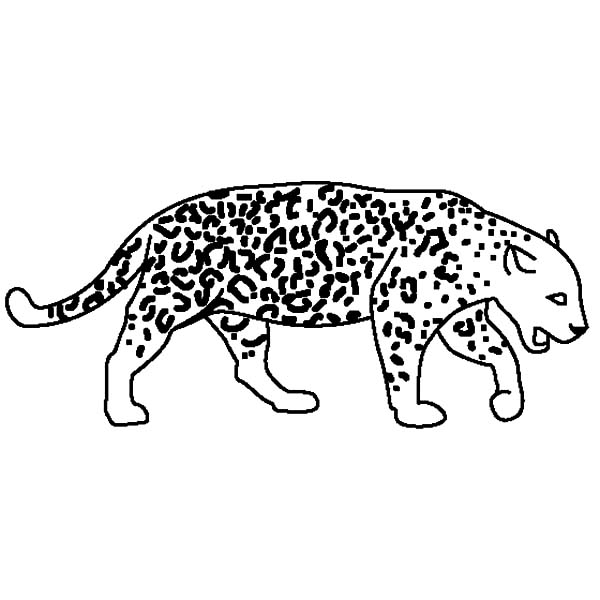 Jaguar, : How to Draw Jaguar Coloring Pages