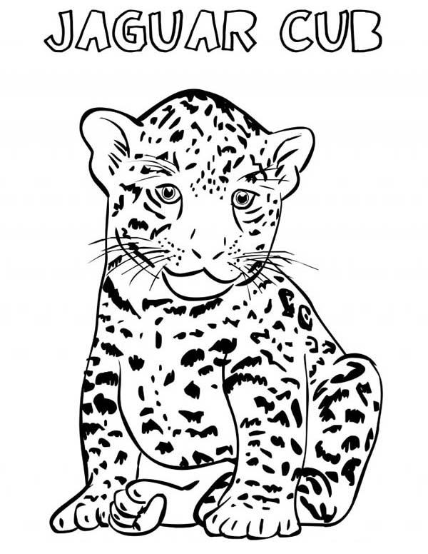 Jaguar, : Jaguar Cub Coloring Pages