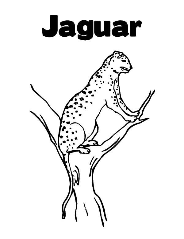 Jaguar, : Jaguar Perching on Tree Branch Coloring Pages
