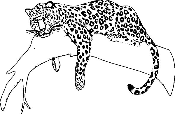 Jaguar, : Jaguar Sleeping on Tree Coloring Pages
