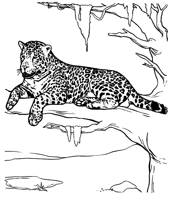 Jaguar, : Jaguar Take a Rest Coloring Pages
