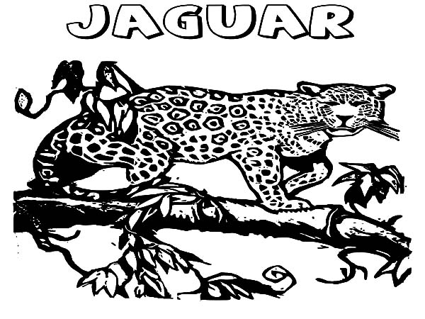 Jaguar, : Jaguar Walking on Tree Coloring Pages