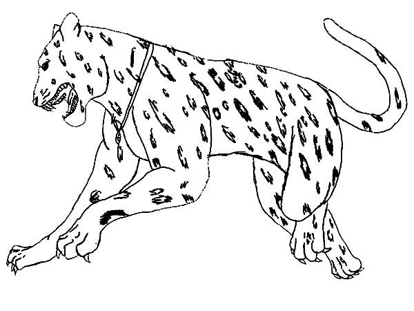 Jaguar, : Jumping Jaguar Coloring Pages