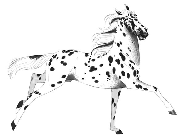 Appalooshorse, : Leopard Appalooshorse Coloring Pages