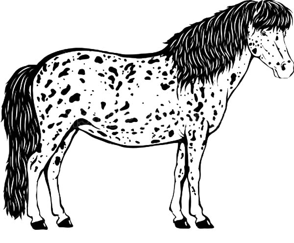Appalooshorse, : Long Haired Appalooshorse Coloring Pages