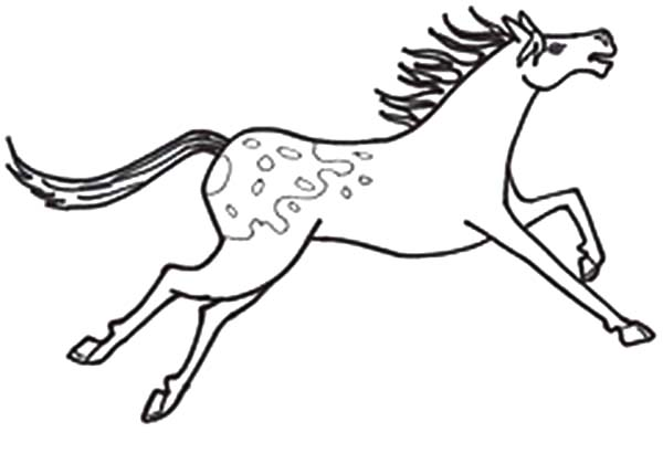 Appalooshorse, : Mottled Skin Appalooshorse Coloring Pages