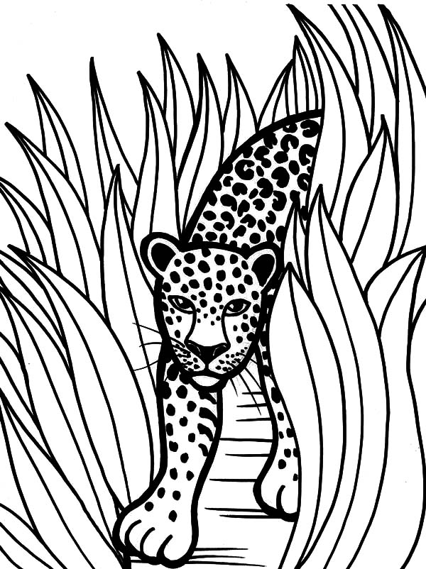 Jaguar, : Rainforest Animal Jaguar Coloring Pages