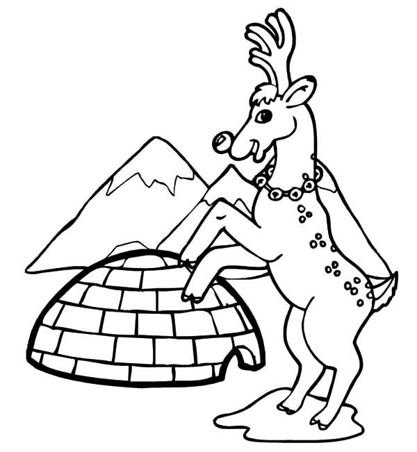 Igloo, : Santa Reindeer and Igloo Coloring Pages