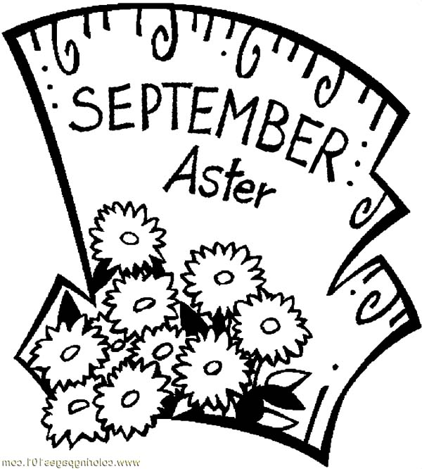 Aster Flower, : September Aster Flower Coloring Pages