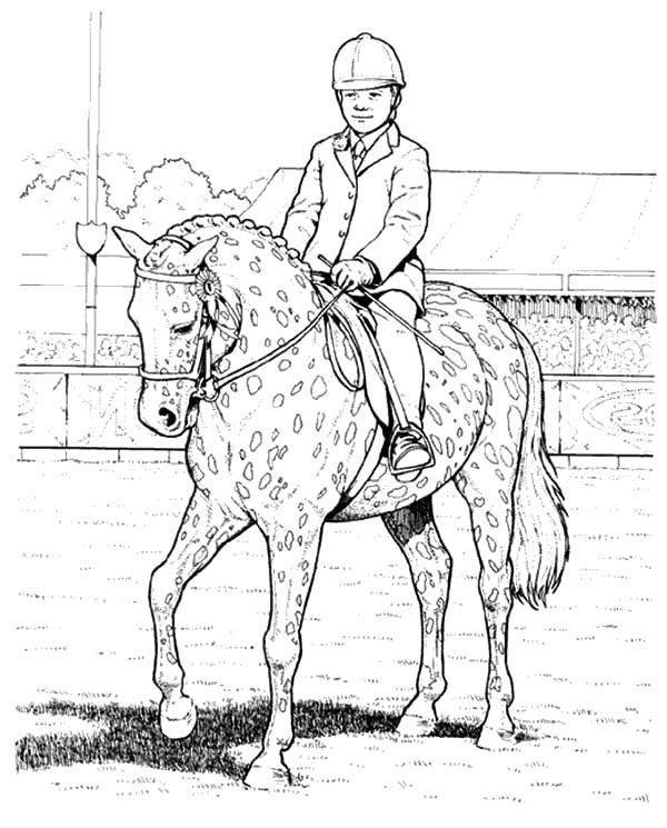Appalooshorse, : Show Boy and Appalooshorse Coloring Pages