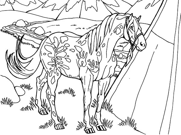 Appalooshorse, : Snowflake Appalooshorse Coloring Pages