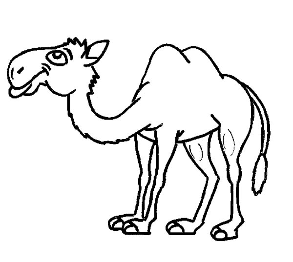 Bactria Camel, : Thin Bactria Camel Coloring Pages